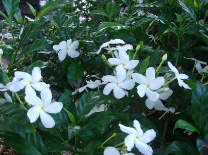 Flowers Bushes Burnett S Wholesale Nursery